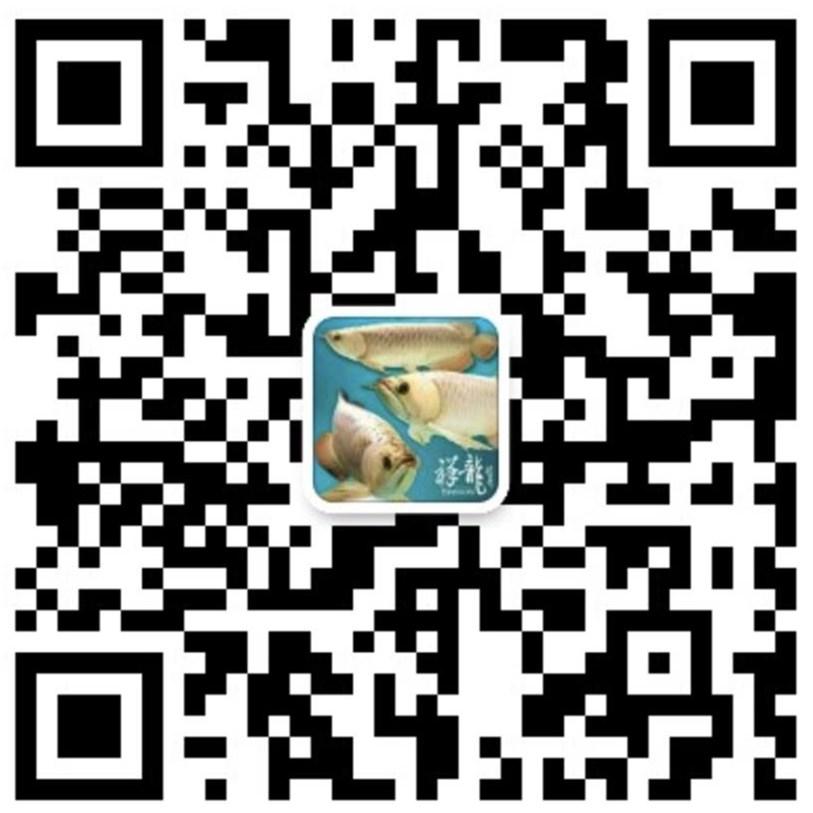 绵阳龙鱼|绵阳水族馆|绵阳水族批发市场微信二维码