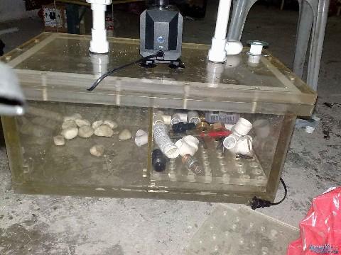 请问大家这个要不要排气的, 绵阳龙鱼论坛