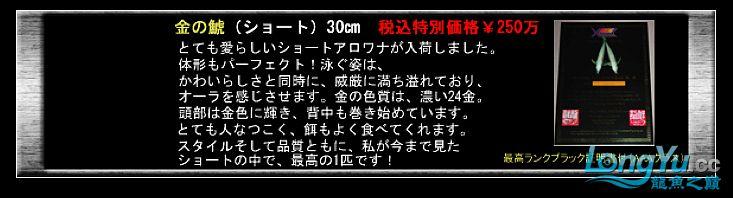 tiger---日本玩家之过背篇(一) 绵阳龙鱼论坛 绵阳水族批发市场第20张
