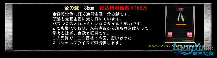 tiger---日本玩家之过背篇(一) 绵阳龙鱼论坛 绵阳水族批发市场第24张