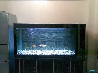 欣赏一下我家的龙宝宝 绵阳龙鱼论坛 绵阳水族批发市场第2张