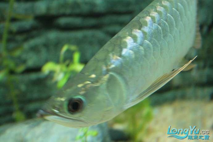 丁丁的鱼到家了 绵阳龙鱼论坛 绵阳水族批发市场第4张