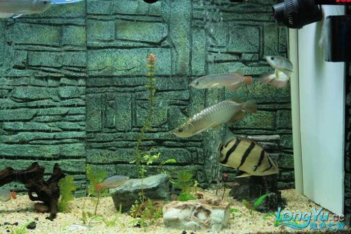 丁丁的鱼到家了 绵阳龙鱼论坛 绵阳水族批发市场第12张