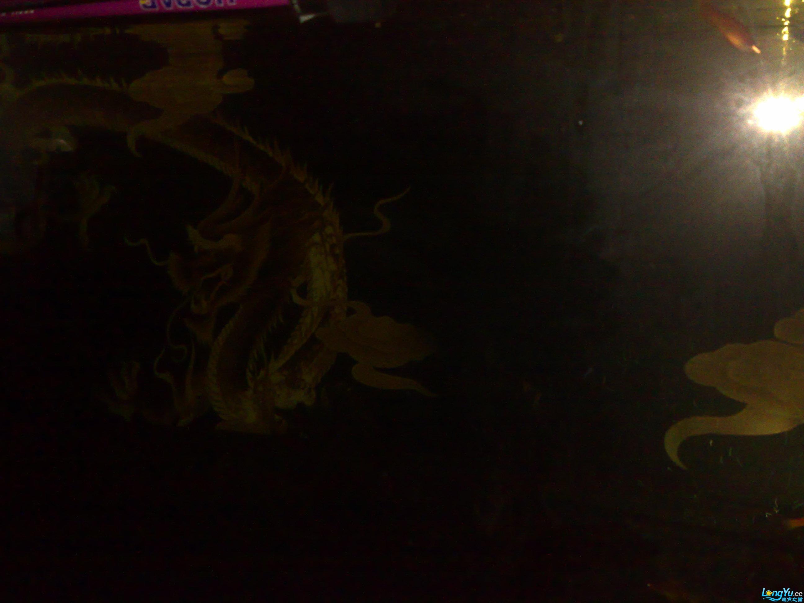 龙缸盖子与夜光灯的做法 大家欣赏