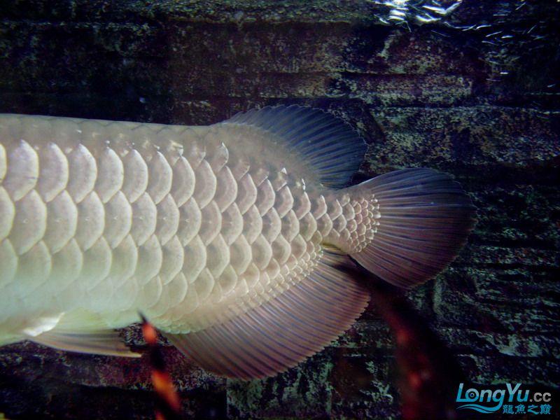这条鱼有前途吗 绵阳水族批发市场 绵阳水族批发市场第3张