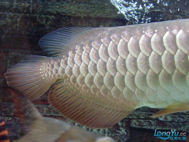 这条鱼有前途吗 绵阳水族批发市场 绵阳水族批发市场第4张