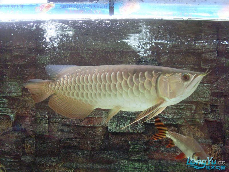 这条鱼有前途吗 绵阳水族批发市场 绵阳水族批发市场第5张