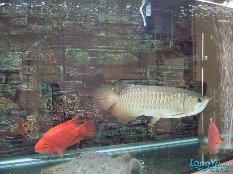 这条鱼有前途吗 绵阳水族批发市场 绵阳水族批发市场第6张