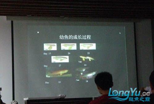 第一届仟湖'龙鱼'研讨会在北京举行 绵阳龙鱼论坛 绵阳水族批发市场第9张