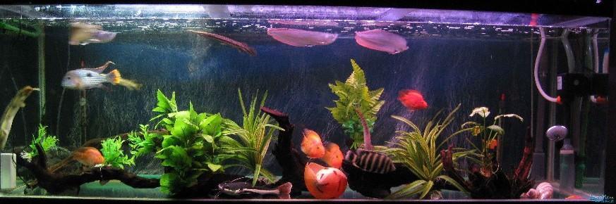 大家看看我的鱼缸!有只鱼不知道叫什么 绵阳龙鱼论坛 绵阳水族批发市场第1张