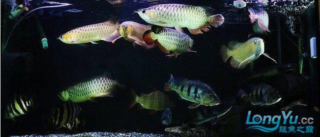 龙鱼混养大杂烩~~~~~~ 绵阳龙鱼论坛 绵阳水族批发市场第3张