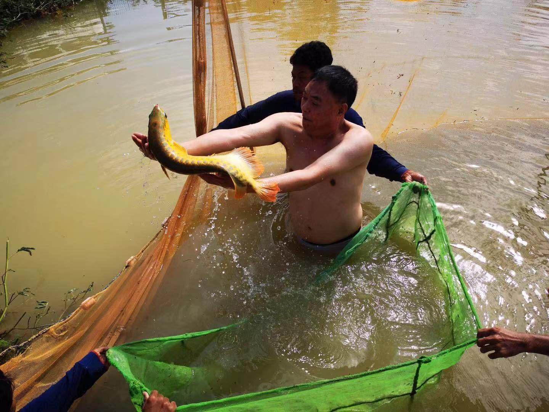 绵阳祥龙水族馆赵总亲自去马来西亚祥龙鱼场参观和选择品种
