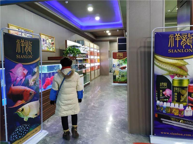 绵阳祥龙水族馆 绵阳祥龙水族馆 绵阳水族批发市场第3张
