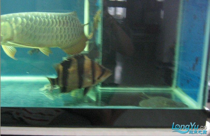 绵阳水族馆我的老虎偶尔也露真容哦~哈哈!