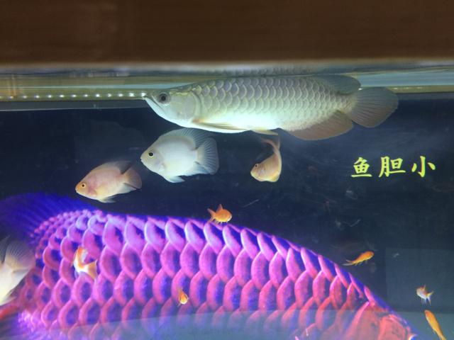 看着不像鱼样子呢 绵阳龙鱼论坛 绵阳水族批发市场第2张