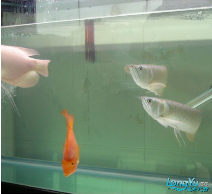 和諧社會,出入雙雙。 绵阳龙鱼论坛 绵阳水族批发市场第2张