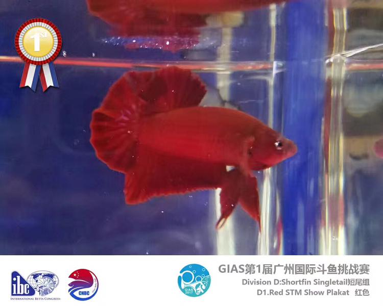 GIAS 2017 将军组获奖鱼绵阳水族馆