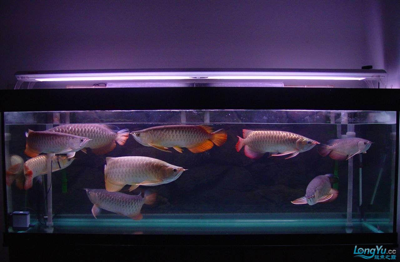 绵阳最大鱼缸征集7月壁纸龙、魟、虎图! 绵阳龙鱼论坛 绵阳水族批发市场第30张