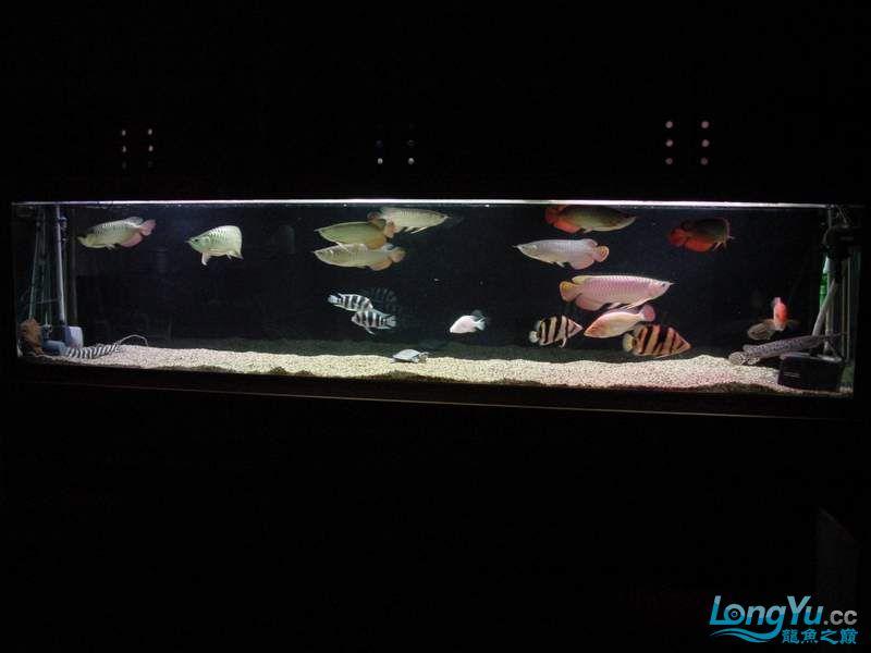 绵阳最大鱼缸征集7月壁纸龙、魟、虎图! 绵阳龙鱼论坛 绵阳水族批发市场第29张