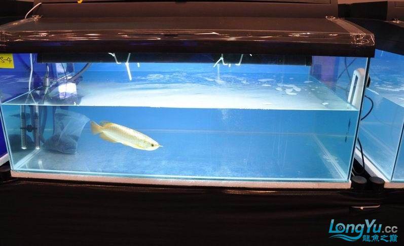绵阳最大鱼缸征集7月壁纸龙、魟、虎图! 绵阳龙鱼论坛 绵阳水族批发市场第41张