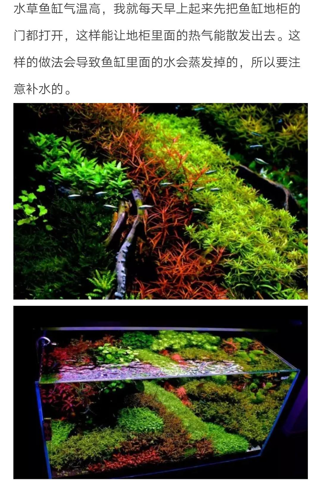 怎样稳定维护好水草缸水质(2)