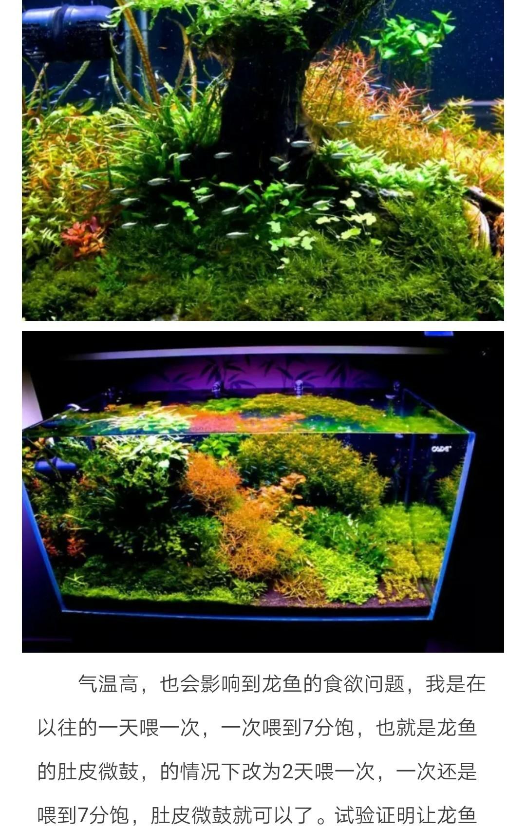 怎样稳定维护好水草缸水质(2) 绵阳龙鱼论坛 绵阳水族批发市场第2张