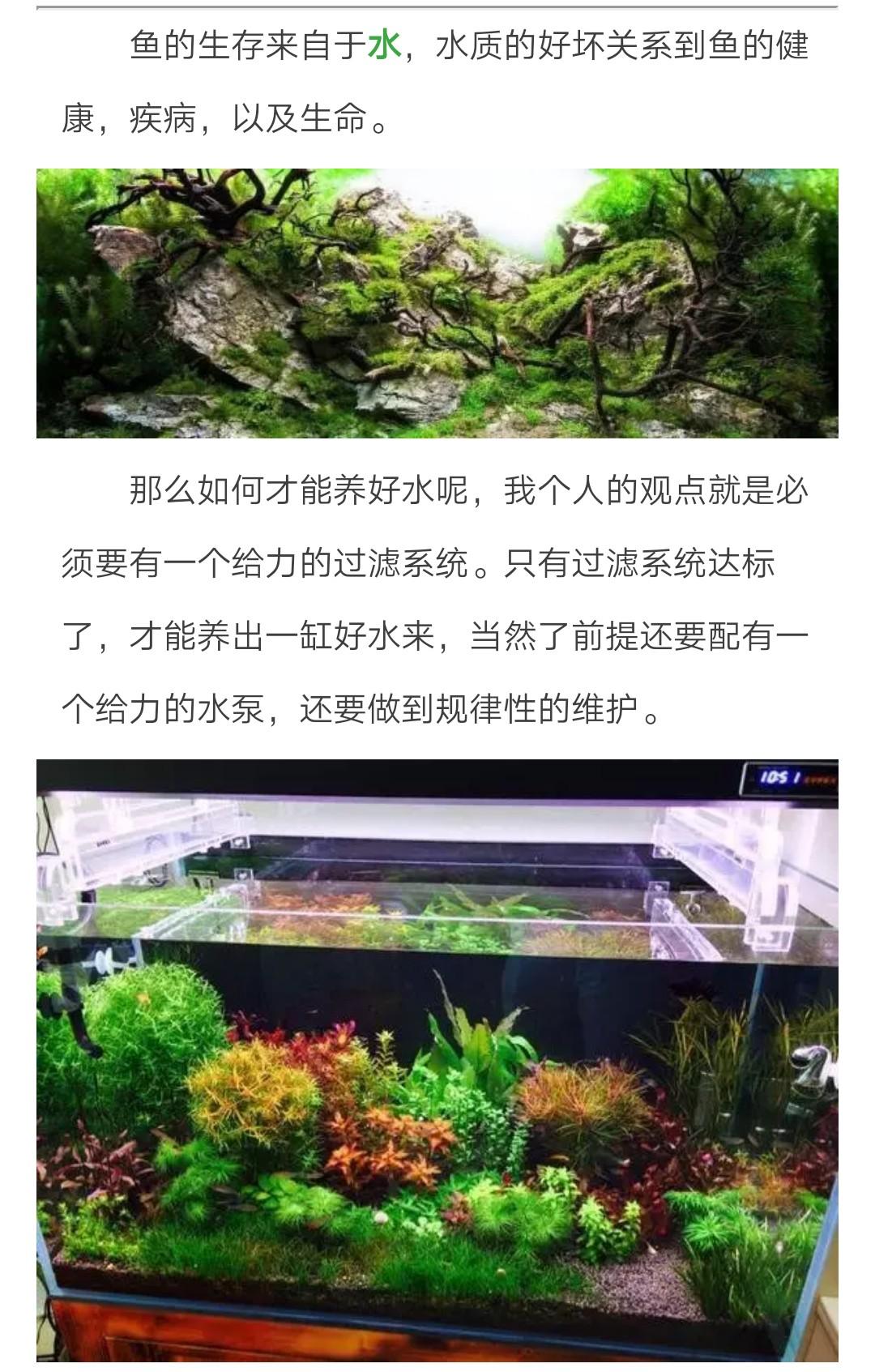 怎样稳定维护好水草缸水质(1)