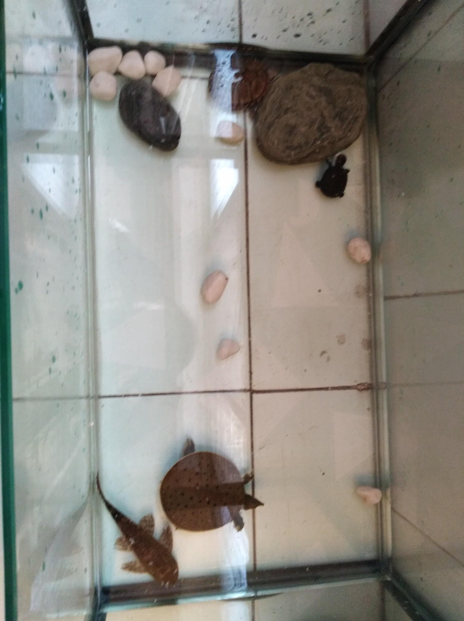 想帮龟买个免去冬眠的缸,却被坑了。 绵阳龙鱼论坛 绵阳水族批发市场第1张