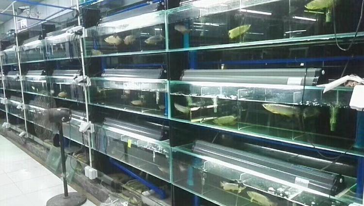 拥有自己的鱼场,欢迎交聊 绵阳龙鱼论坛 绵阳水族批发市场第3张