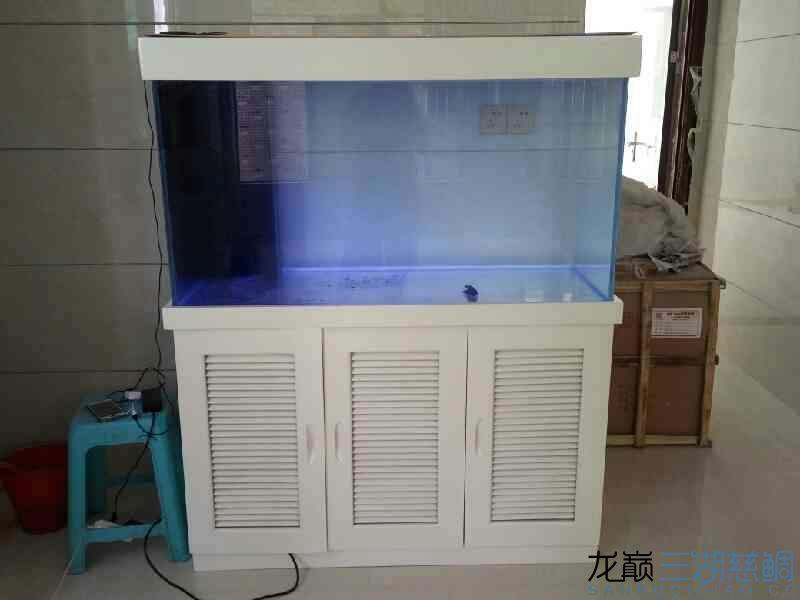 新到的缸 126065 绵阳龙鱼论坛 绵阳水族批发市场第2张