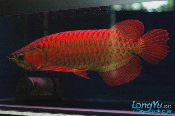 请教大家这样一条鱼多少钱可以请?