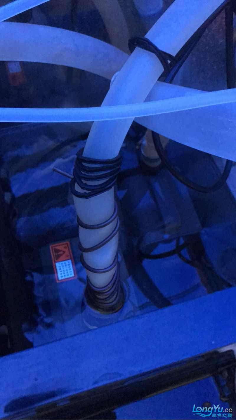 空气缸终于有所小成了 绵阳龙鱼论坛 绵阳水族批发市场第2张