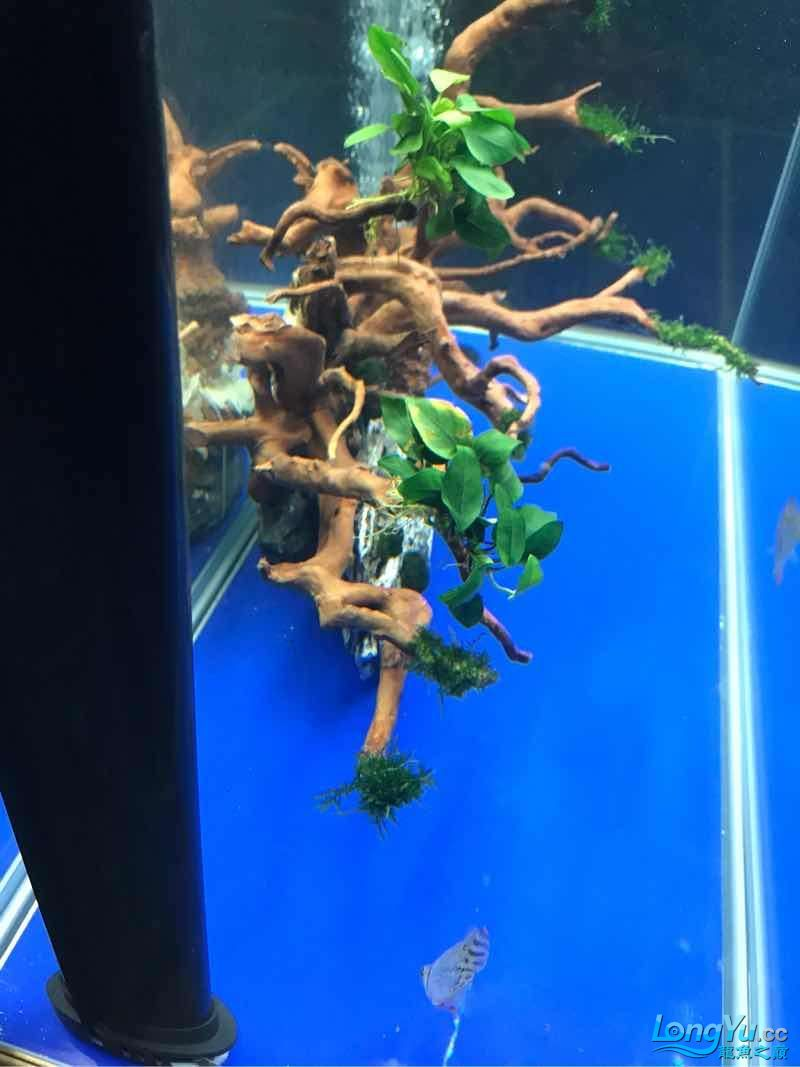 空气缸终于有所小成了 绵阳龙鱼论坛 绵阳水族批发市场第7张
