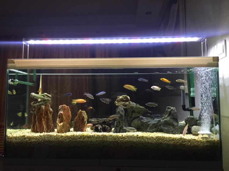 新开不久的三湖绵阳观赏鱼缸 绵阳龙鱼论坛 绵阳水族批发市场第1张