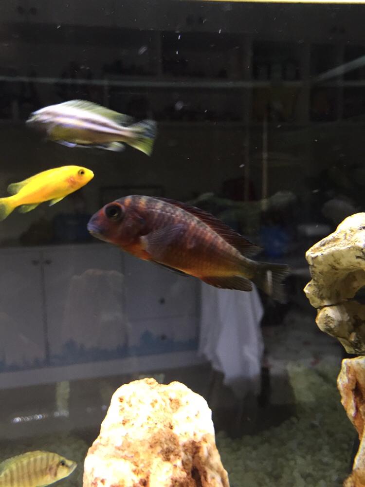 新开不久的三湖绵阳观赏鱼缸 绵阳龙鱼论坛 绵阳水族批发市场第4张