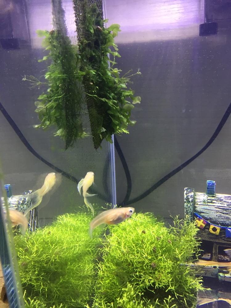 看看我家养的一群吃货 绵阳龙鱼论坛 绵阳水族批发市场第2张