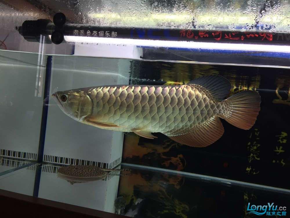 绵阳鱼缸批发市场想换个鱼缸底色 绵阳龙鱼论坛 绵阳水族批发市场第2张