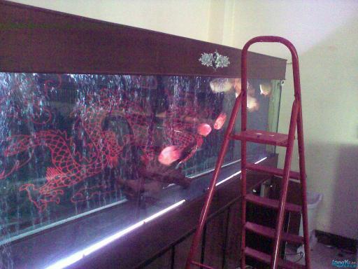 一位发烧友的混养绵阳最大鱼缸,强悍的过滤 绵阳龙鱼论坛 绵阳水族批发市场第2张