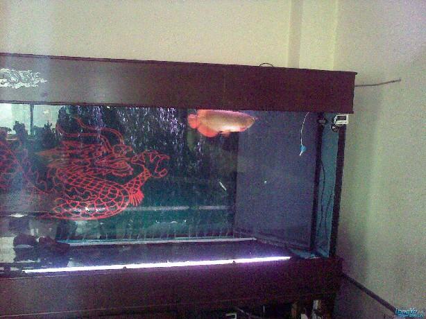 一位发烧友的混养绵阳最大鱼缸,强悍的过滤 绵阳龙鱼论坛 绵阳水族批发市场第3张