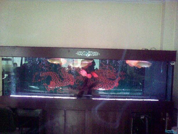 一位发烧友的混养绵阳最大鱼缸,强悍的过滤 绵阳龙鱼论坛 绵阳水族批发市场第4张
