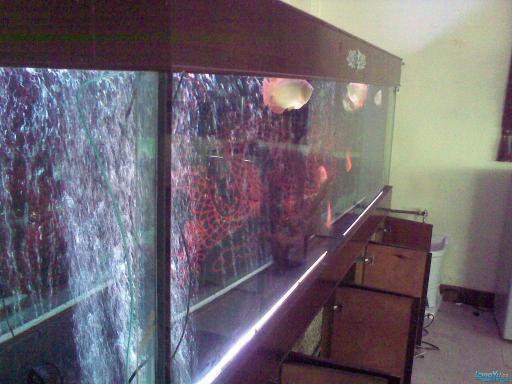 一位发烧友的混养绵阳最大鱼缸,强悍的过滤 绵阳龙鱼论坛 绵阳水族批发市场第13张