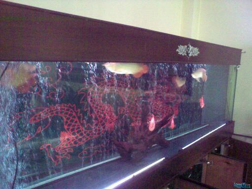 一位发烧友的混养绵阳最大鱼缸,强悍的过滤 绵阳龙鱼论坛 绵阳水族批发市场第14张