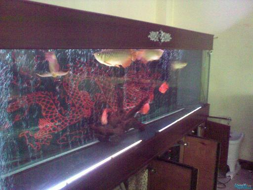 一位发烧友的混养绵阳最大鱼缸,强悍的过滤 绵阳龙鱼论坛 绵阳水族批发市场第15张