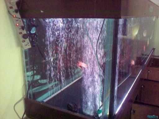 一位发烧友的混养绵阳最大鱼缸,强悍的过滤 绵阳龙鱼论坛 绵阳水族批发市场第17张