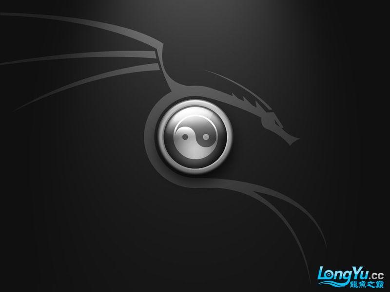 急求背景: 黑色底,中间一条圆的龙