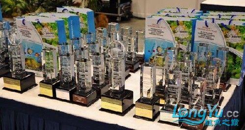 马来西亚吉隆坡双子塔颁奖 绵阳龙鱼论坛 绵阳水族批发市场第3张
