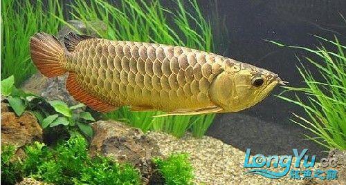 马来西亚吉隆坡双子塔颁奖 绵阳龙鱼论坛 绵阳水族批发市场第10张