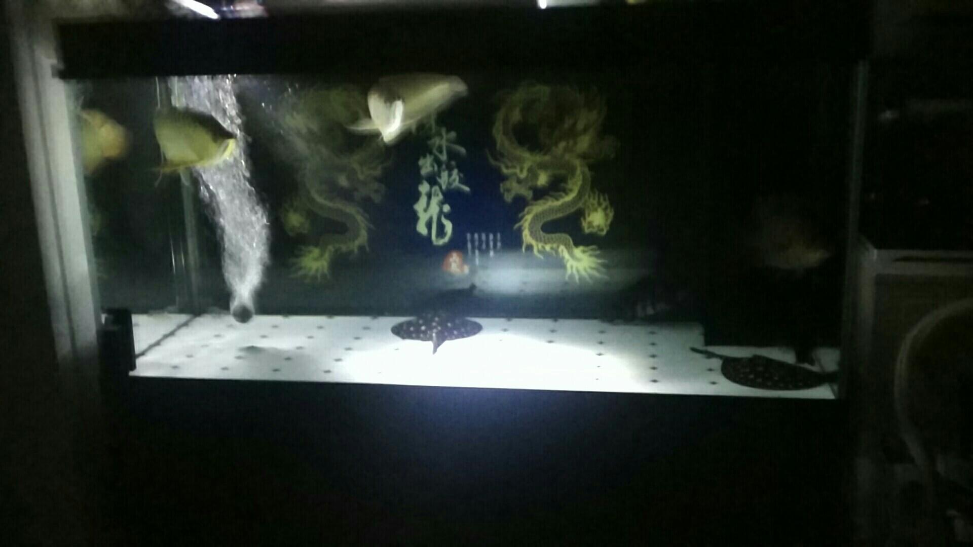 小夜灯还是很给力 绵阳龙鱼论坛