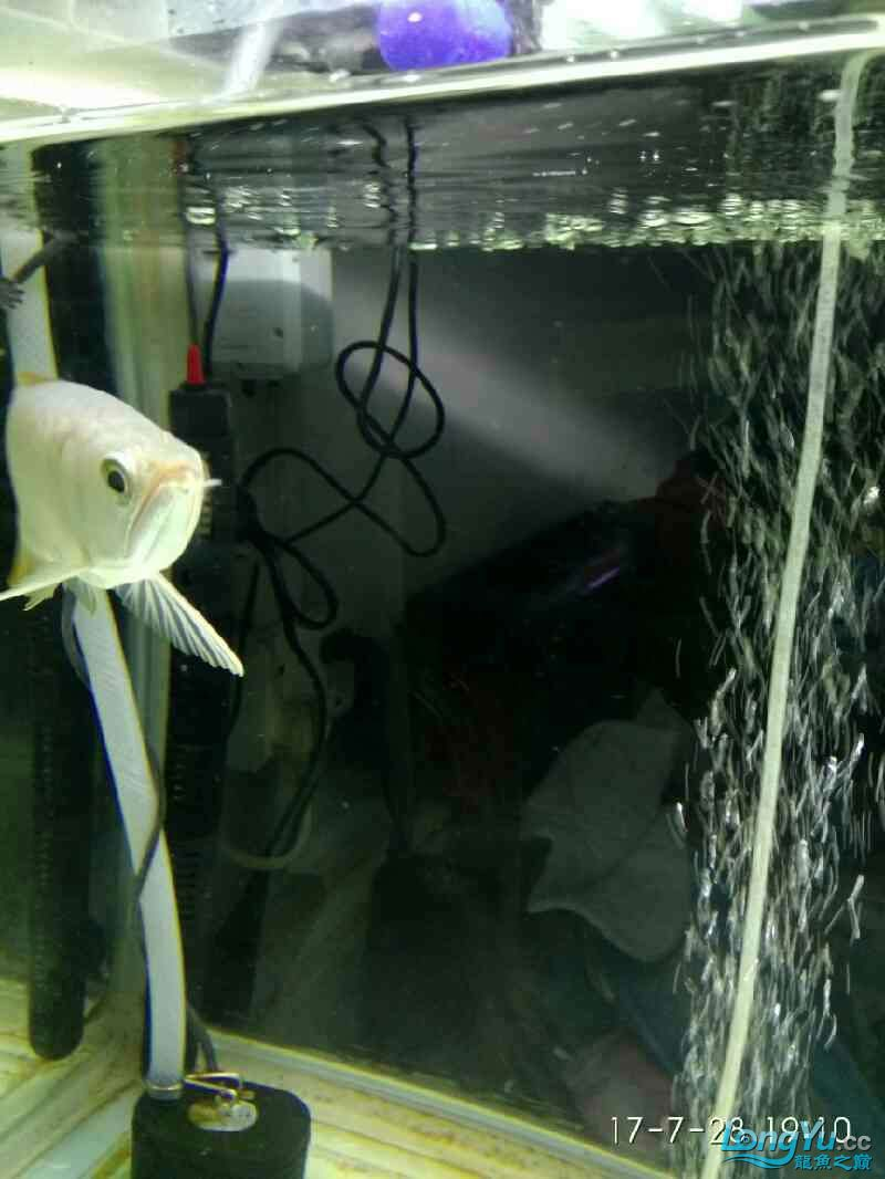 绵阳鱼缸大家看看什么鱼 绵阳龙鱼论坛 绵阳水族批发市场第3张