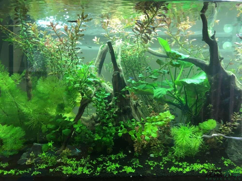 求助,辨别藻类
